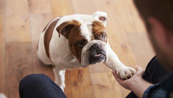 5 причин, почему вам стоит завести бульдога
