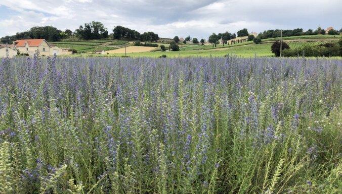Ainaviski vīnogu lauki, mazo pilsētiņu šarms un nepiespiesta gaisotne: ceļojums pa Bordo