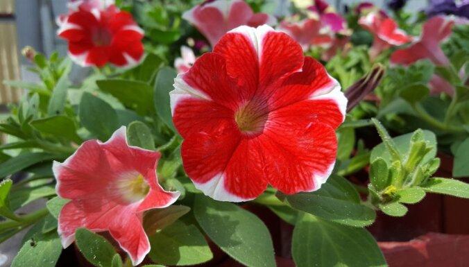 """Не только красивые, но и полезные: какие цветы нужно """"пускать в огород"""" и для чего?"""