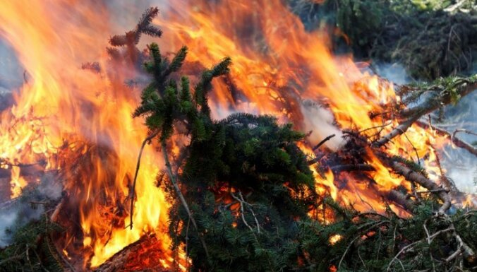 В субботу в лесах произошло 11 пожаров