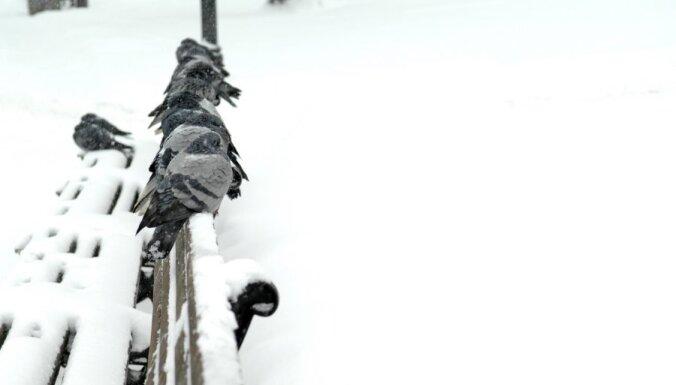 В четверг два человека получили обморожения, заснув в сугробах