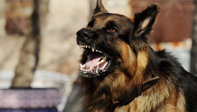 Saimnieku nepieskatītu suņu dēļ pērn cietuši 10 pastnieki