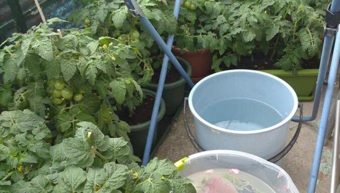 Ideja: nosargā balkona augus no izkalšanas ar agroplēvi