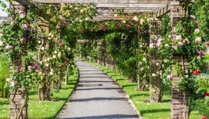 Stikla pilis un augu paradīze – iespaidīgais Kjū Karaliskais botāniskais dārzs