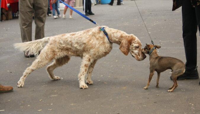 Septiņi veidi, kā tu neapzināti kaitē savam sunim