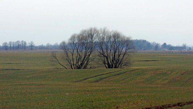 Lauksaimnieki: vietām Latvijā ir bažas par sējumu dzeltēšanu; Zemgalē ziemo normāli