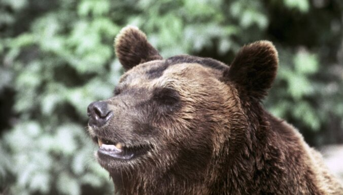 ВИДЕО: На Курилах задержаны автолюбители, которые пытались джипом раздавить медведя