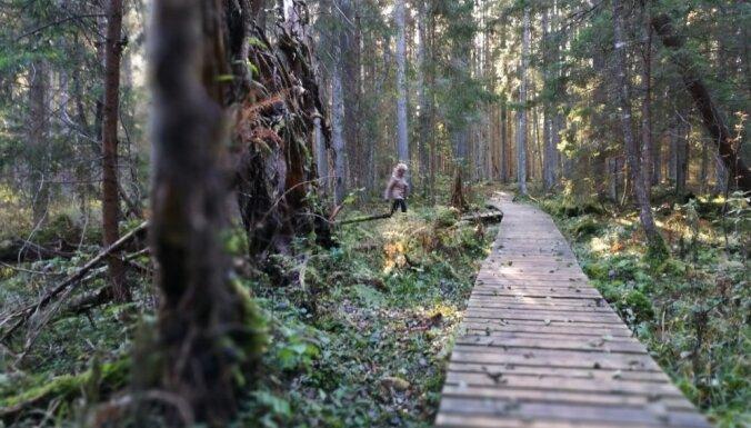 Семь природных троп Курземе, которые вас не разочаруют