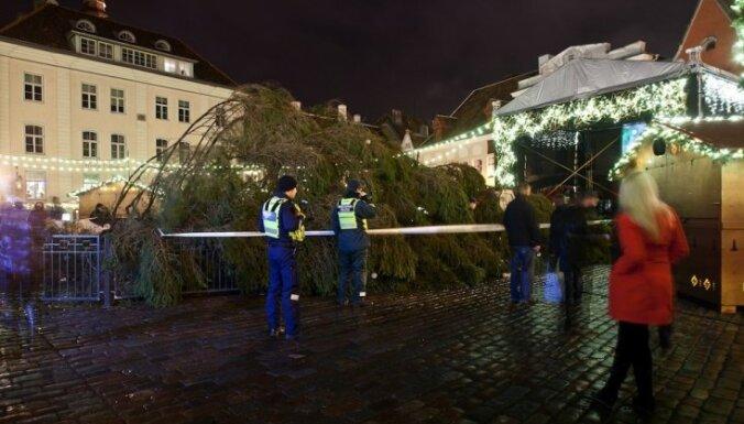 На Ратушной площади Таллинна вновь упала елка