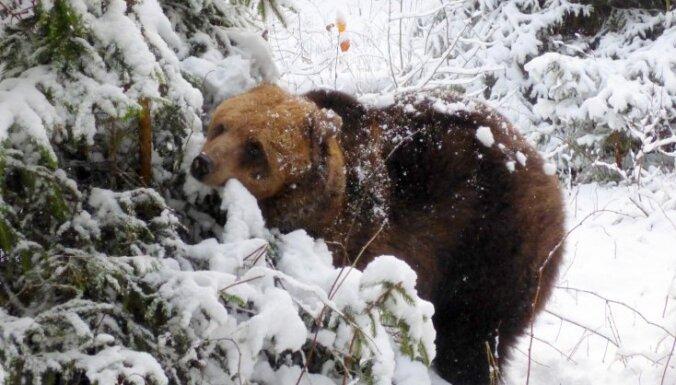 Foto: Līgatnes dabas takas jau vairāk nekā 40 gadus ļauj iepazīt Latvijas dzīvniekus