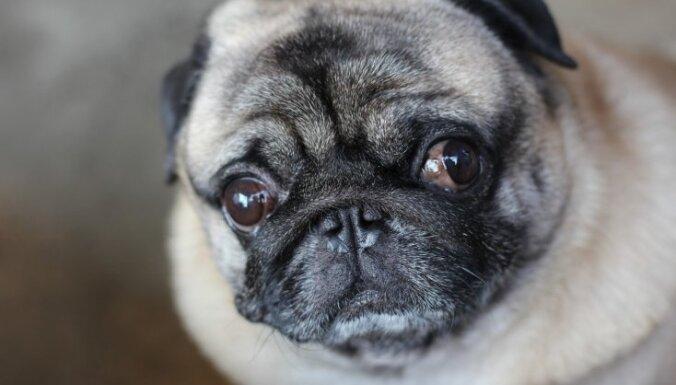 Немецкие чиновники изъяли у должников собаку и продали ее в интернете