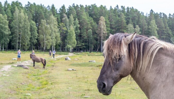 ФОТО. Озеро Энгурес — дикие лошади и тропа орхидей