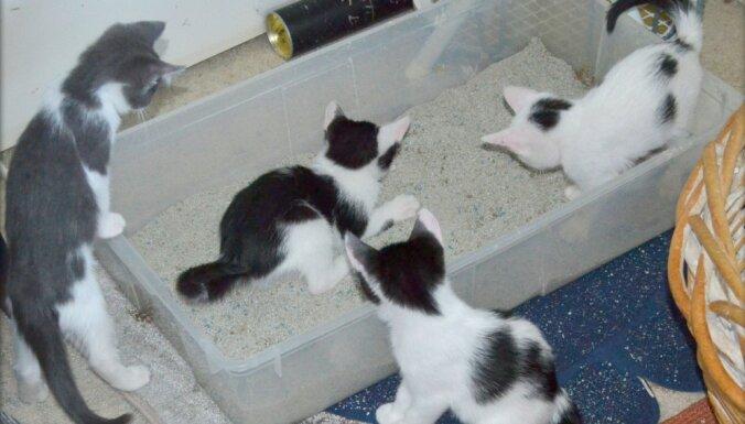 10 необычных способов использования наполнителя для кошачьего туалета