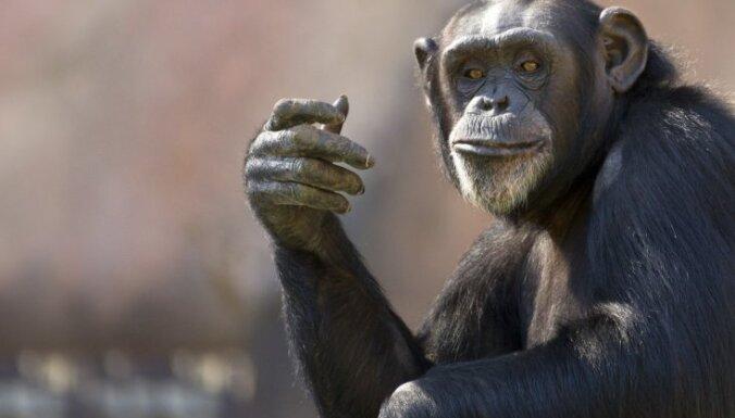 No dažiem gramiem līdz vairākiem kilogramiem – kādas ir dzīvnieku smadzenes?