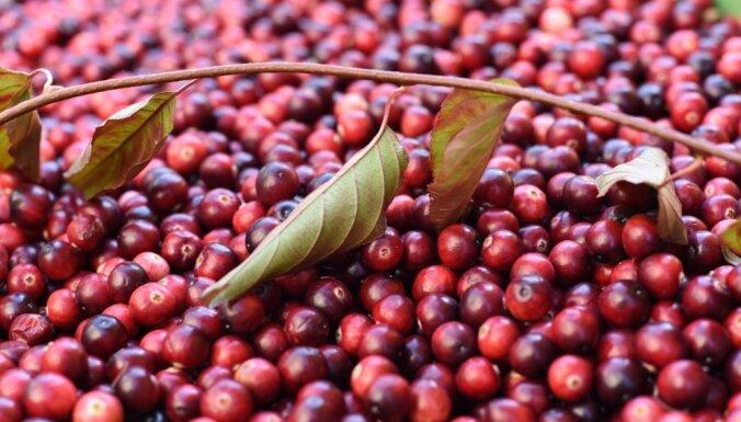 Jāvāc oktobrī: iecienītākie savvaļas ārstniecības augi un to pielietojums