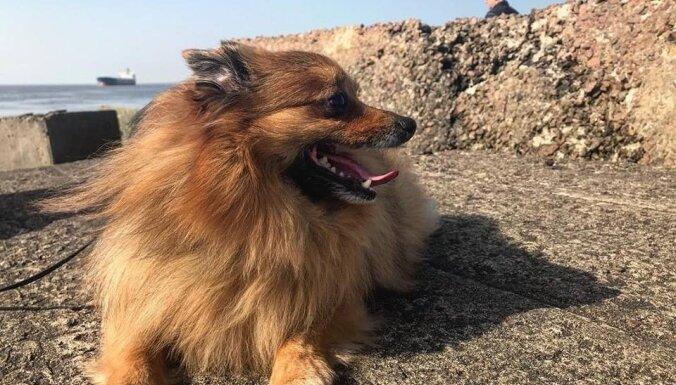 Spītējot liktenim: 10 aizkustinoši stāsti par cilvēkiem, kas adoptējuši nelaimē nonākušus dzīvniekus
