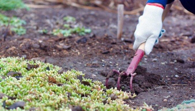 Kas darāms dārzā un pagalmā līdz 12. novembrim