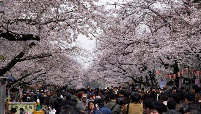 Japānā 'Covid-19' dēļ atcelti tradicionālie ķiršu ziedēšanas festivāli