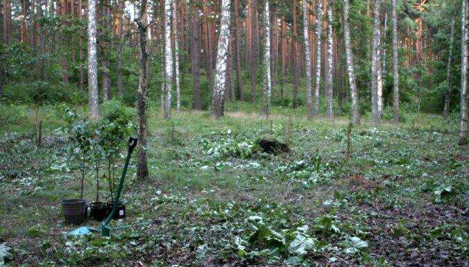 'Latvijas Finieris' zemniekiem piedāvās atbalsta programmu aizaugušās zemes apmežošanai