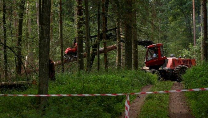 C 15 апреля начинает действовать запрет на сруб деревьев