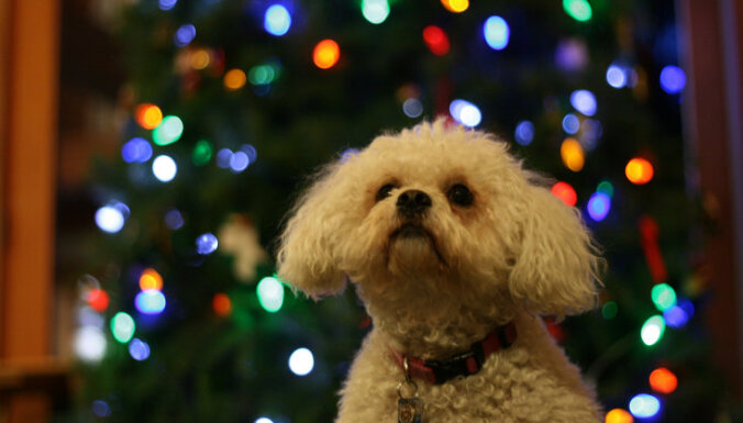 Ko dāvināt savam mīlulim Ziemassvētkos? Idejas laicīgiem svētku plānotājiem