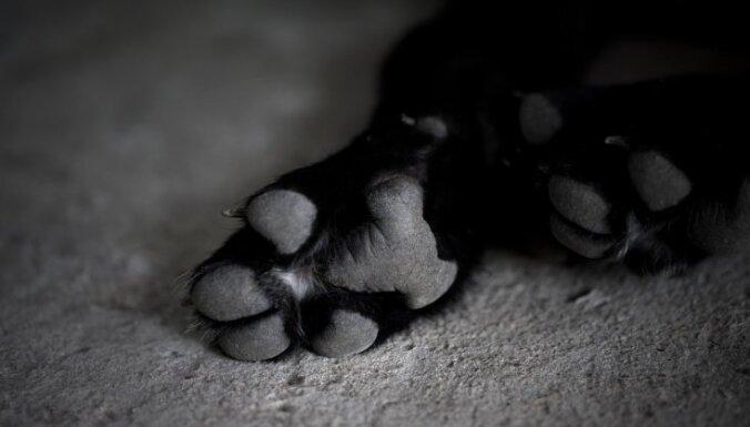 """Хозяйка наняла """"киллера"""" убить свою состарившуюся и ставшую ненужной собаку"""