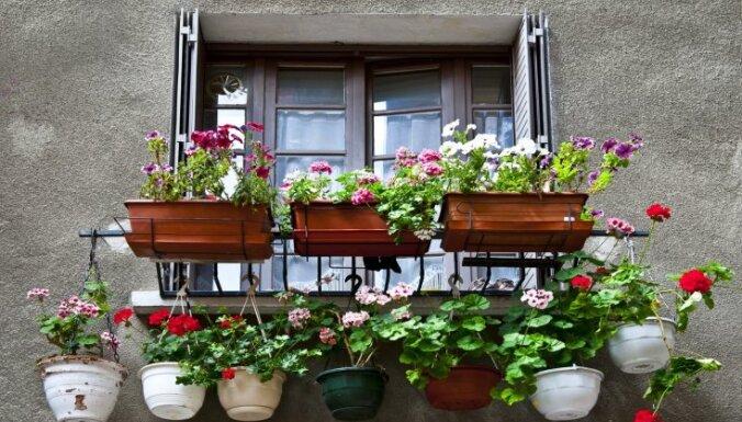 Vai puķu kastes uz balkona un palodzes jāsaskaņo ar pašvaldību?