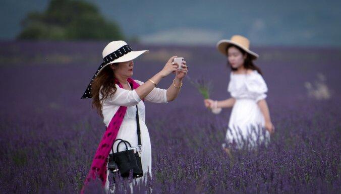 ТОП-7 самых волшебных садов и цветочных полей, которыми можно любоваться вечно