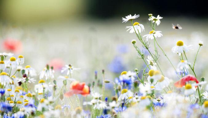 Лекарства под ногами. Главные травы для вашего здоровья, которые можно собрать летом