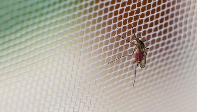 Karš ar odiem. Kā cīnīties ar odu klātbūtni?