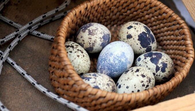 """ПВС нашла опасный антибиотик в перепелиных яйцах: как отличить, """"заражены"""" они или нет"""