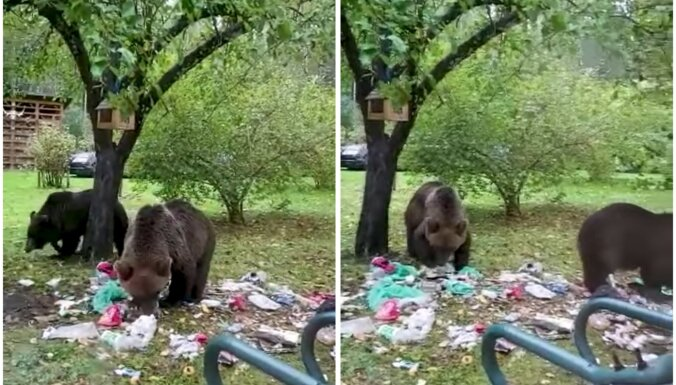 Video: Vijciema čiekurkaltes teritorijā šiverē divi lāči
