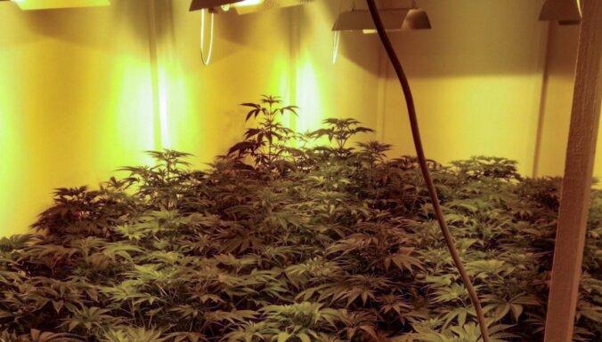 Полиция нашла в теплице плантацию марихуаны
