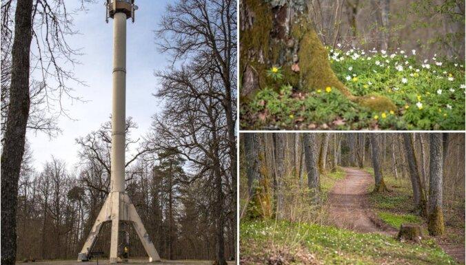 Lieliska vieta pavasara pastaigai – mītiskais Zilaiskalns