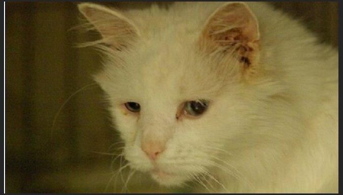 В Пурвциемсе нашли старую глухую кошку: приют разыскивает владельцев