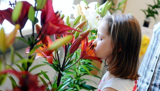 Foto: 200 aromātiskas liliju šķirnes Latvijas Dabas muzejā