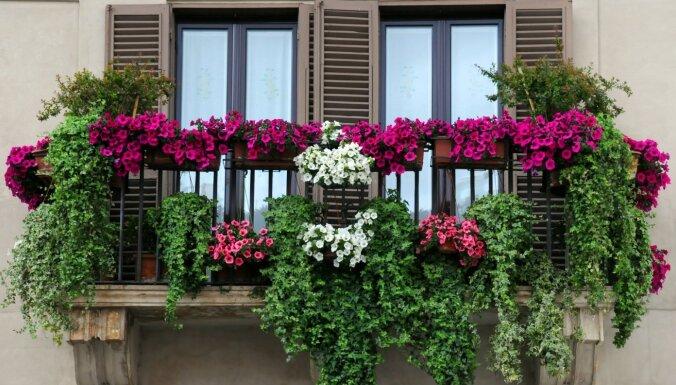 Balkona mazdārziņš: špikeris ziedu kompozīcijām un padomi augu kopšanā