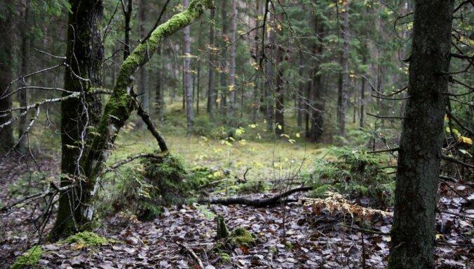 Vai tiešām veci meži vairāk piesaista oglekli? Jaunākās pasaules un Latvijas atziņas