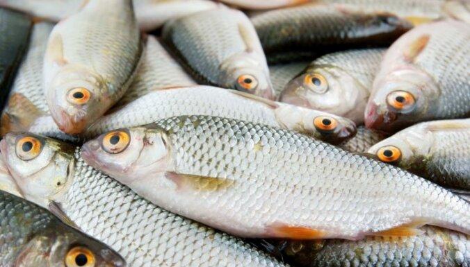 Ученые: вещества из канализации превращают рыб-самцов в самок