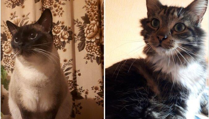 Gribēja vienu, pieņēma divus: pieredzes stāsts par kaķēnu adopciju no patversmes