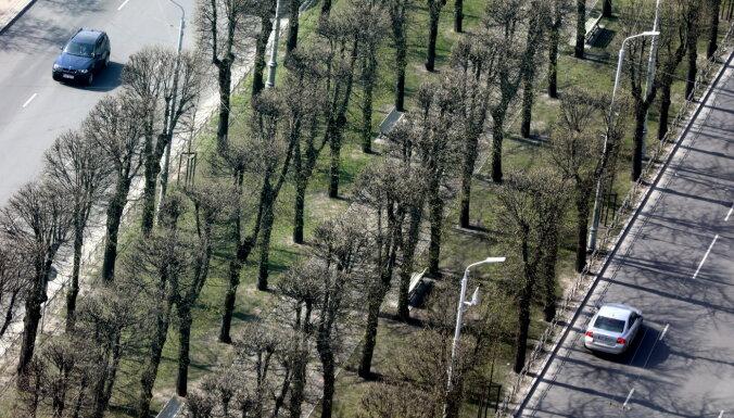 В Риге посадят новые деревья, закупка саженцев обойдется в 118 тысяч евро