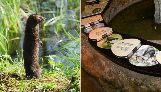 Jaunie Rīgas zoo interaktīvie stendi izglītos par invazīvajām sugām