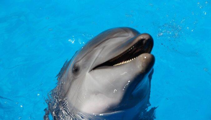 Дельфин-одиночка наводил страх на туристов, но дружба с человеком изменила его жизнь