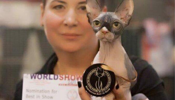 Ļaļa, Zorro un Zuri – veiksmīgākie 'latvieši' starptautiskā kaķu izstādē Nīderlandē