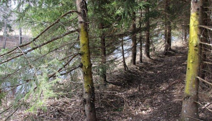Viltojot mirušas sievietes testamentu, izkrāpj 47 hektārus meža