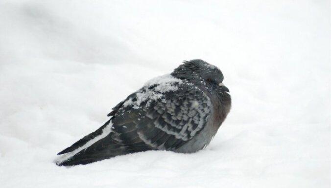 Priekuļos pārspēts 83 gadus sens 5.februāra aukstuma rekords