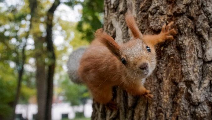 Фантастические твари: Милые животные способны навредить целым континентам. Почему в этом виноваты люди?