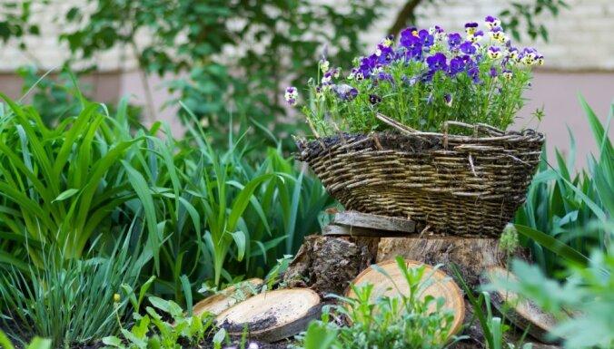 Календарь садовода: чем заняться на участке в апреле