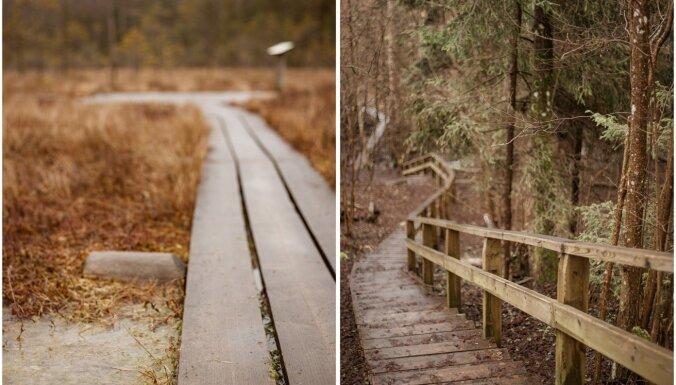 Īsas, bet fantastiskas dabas takas Latvijā