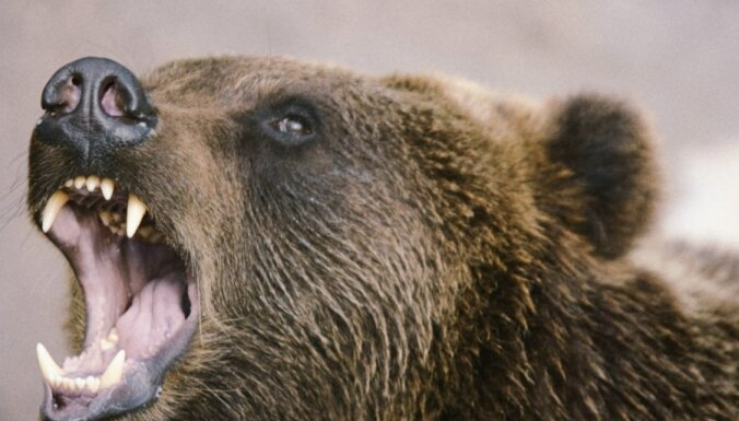 В Эстонии неподалеку от Таллина медведь напал на охотника